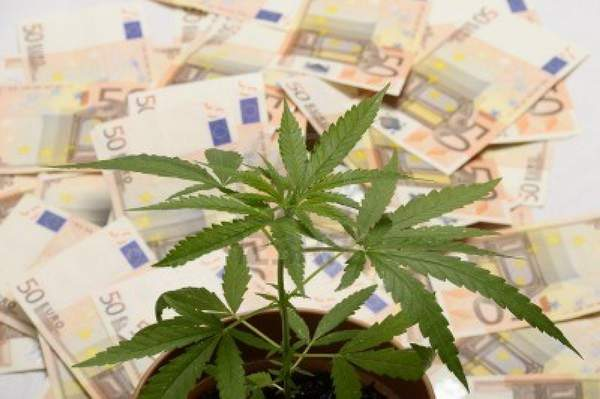 cannabis-plant-and-lot-of-euro-money-from-drug