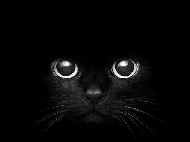 modern-art-black-cat-with-big-eyes-wallszone-267659