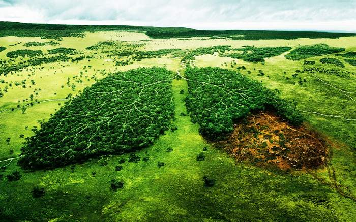 Creative_Wallpaper_Deforestation_patients_lungs_025769_
