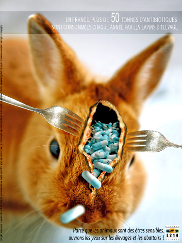 affiche-lapin-antibiotique-Joan-2010