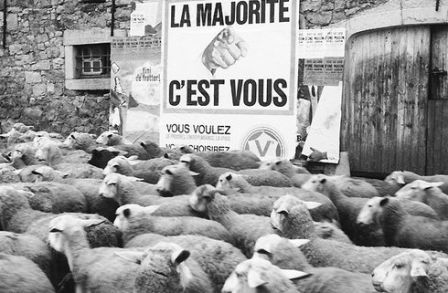 "Résultat de recherche d'images pour ""voter moutons humeur"""