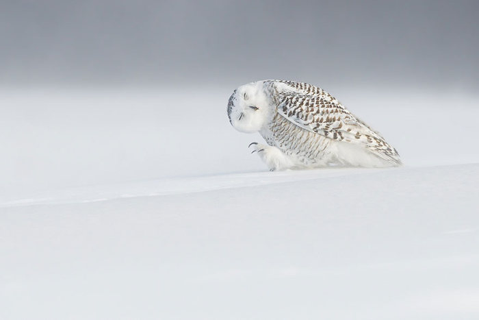 national_geographic_photo_04