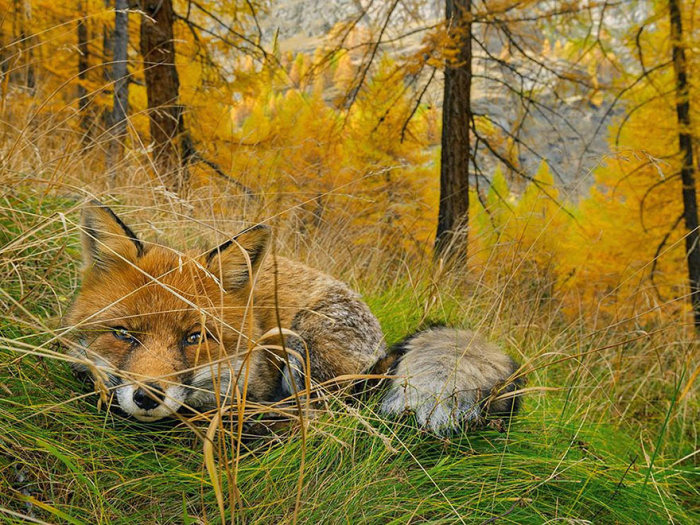 national_geographic_photo_11