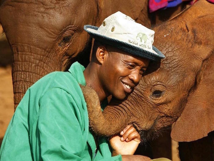 david-sheldrick-wildlife-trust-elephants-protection-kenya-02
