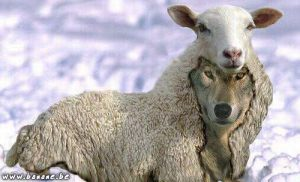 038_mouton-loup