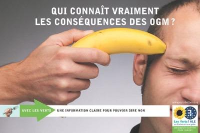 banane-OGM