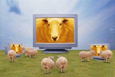 sheepTV
