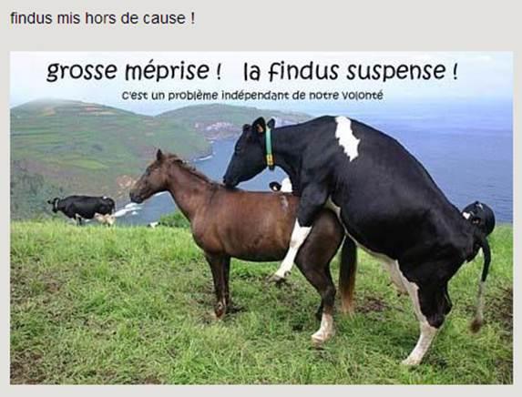 Findus-hors-de-cause