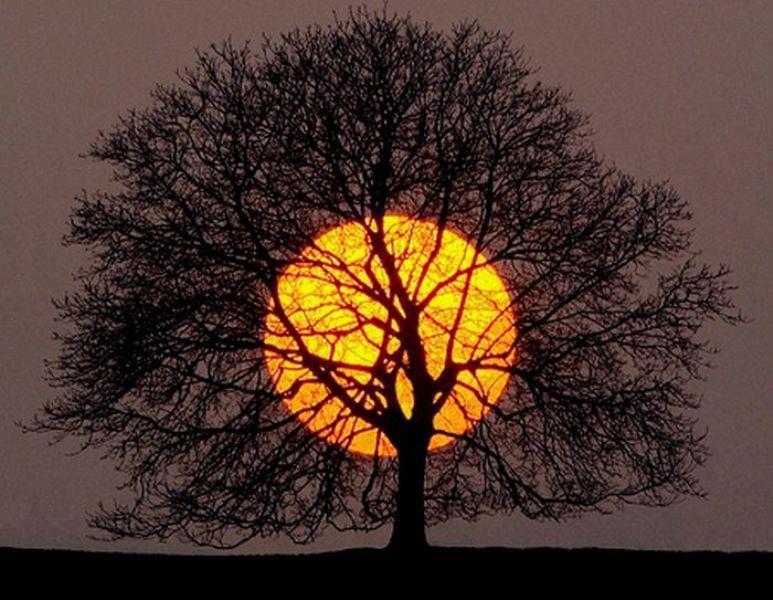 l'arbre et le soleil