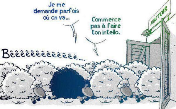 moutonnoir