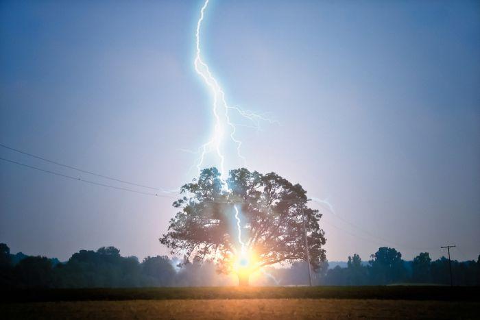 Lightning Strikes Oak Tree