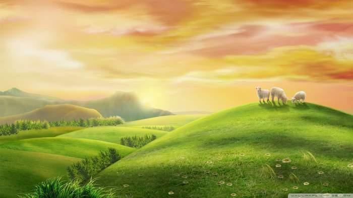 sheeps-2_00451092