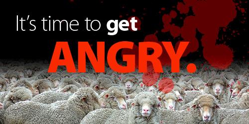 500-sheep_slaughter