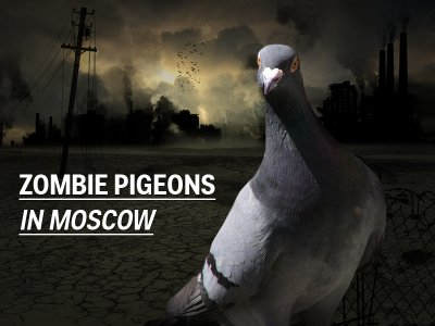 zombie-pigeons-in-moscow
