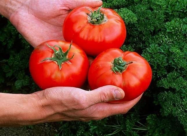 cuisiner-tomate-l650-h474-c