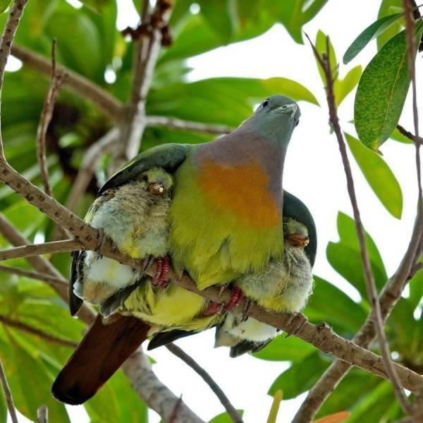 maman et bebes oiseaux