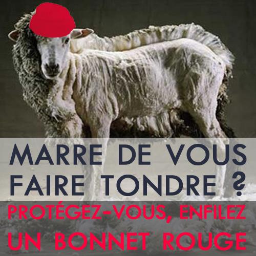 mouton-bonnet-rouge