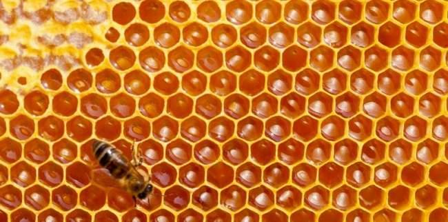 6119136-abeilles-l-enigme-de-leurs-alveoles-hexagonales-est-resolue