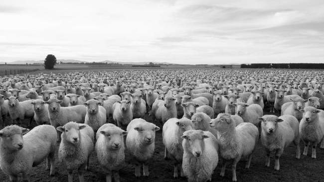 effet-mouton