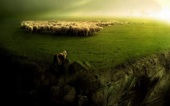 wolf-and-the-sheeps-background