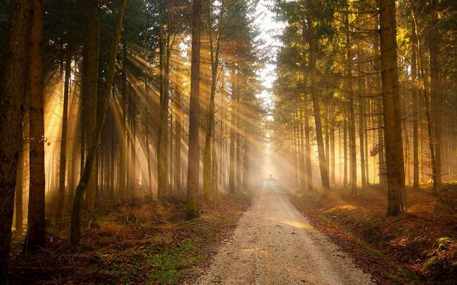 Nature-Trees-Forest-Path-Sunlight