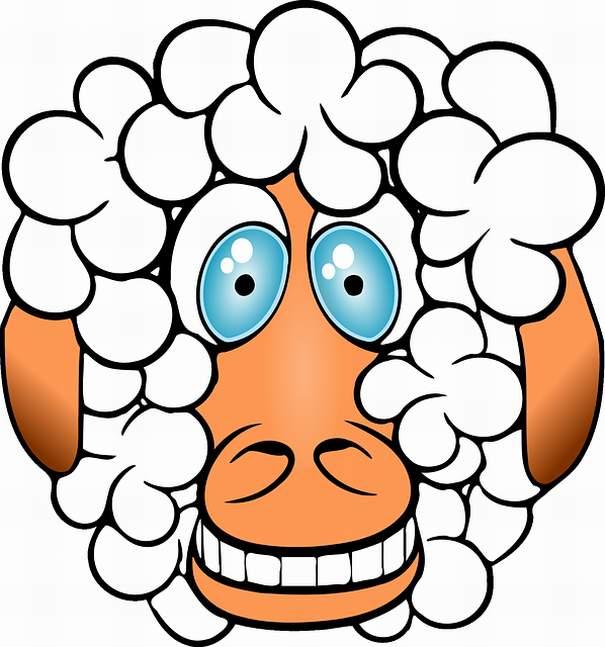 sheep-156163_640