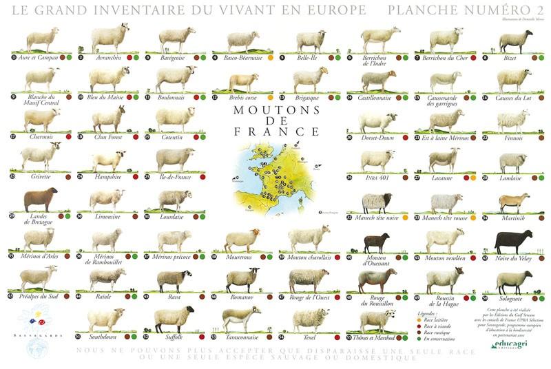 moutons-de-france
