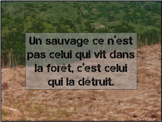 sauvage2