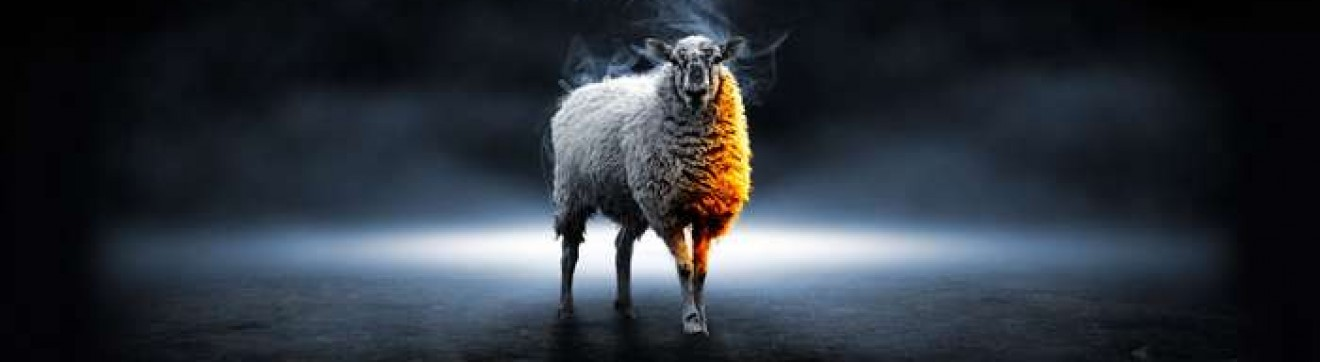 cropped-Mouton-devant-bouger-1.jpg