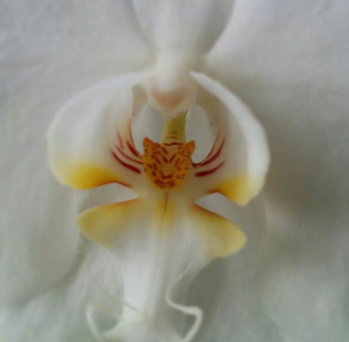 fleurs-formes-insolites-ressemble-animaux-humains-24