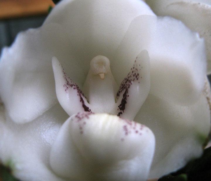 fleurs-formes-insolites-ressemble-animaux-humains-30
