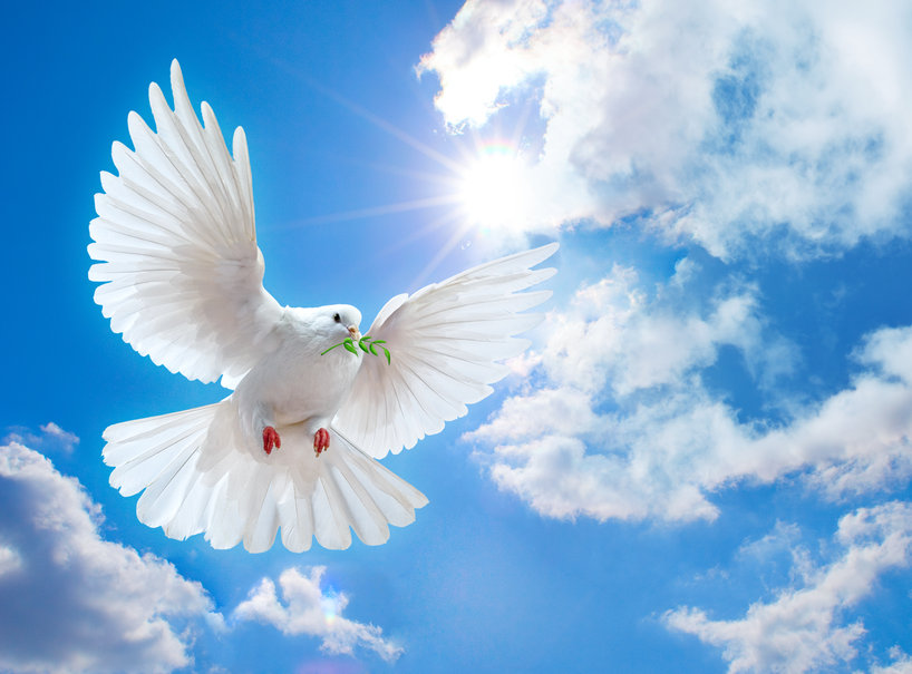 353430__dove-of-peace_p