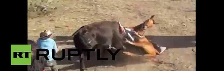 Mise à mort cheval colombie