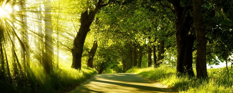 green-nature-dual-monitor-other