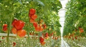 plus_de_80_pesticides_differen