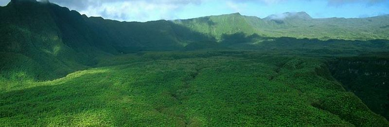 2747002-prehistoric_forest