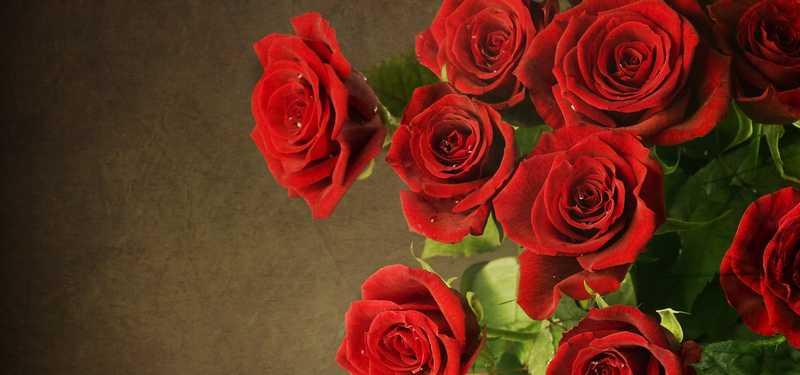 6951144-roses-wallpaper