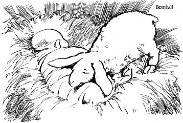 lamb3-web
