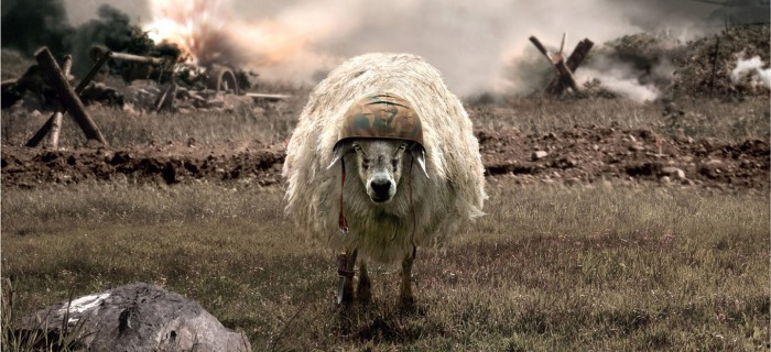 sheep-war-large-700x320