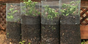 tour-à-pommes-de-terre-2