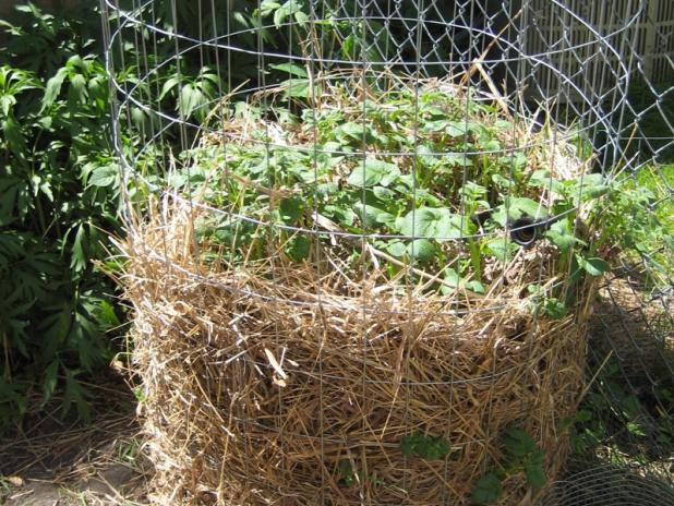 Comment planter des pommes de terre elegant pomme de - Comment planter des patates douces ...
