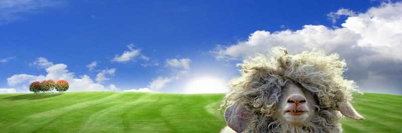 Mouton champs