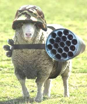 https://lesmoutonsenrages.fr/wp-content/uploads/2015/07/mouton-casqu%C3%A9.jpg
