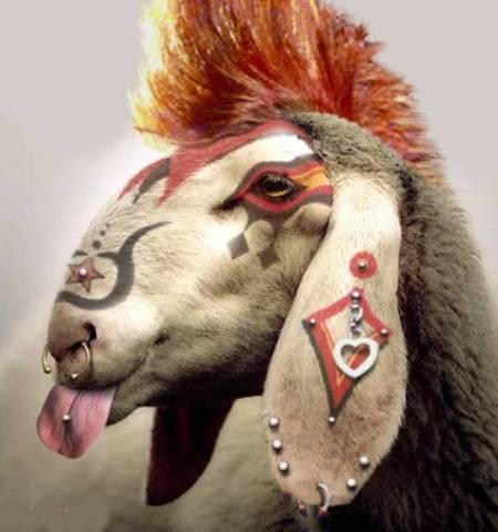 mouton-punk-645953