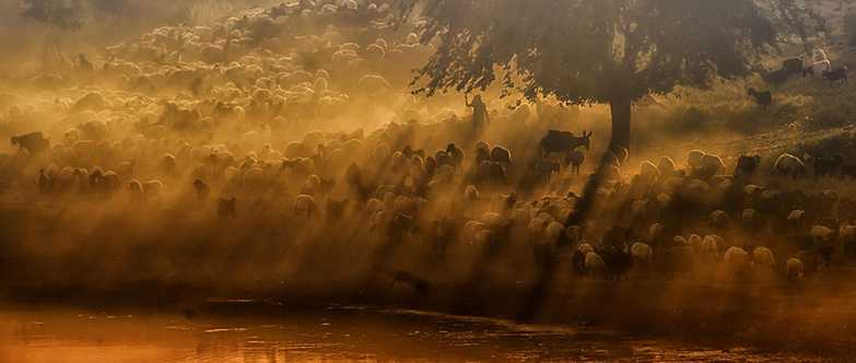 25-magnifiques-photos-de-moutons-en-troupeau-9