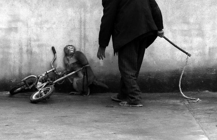 yongzhi-chu-worldpress-cirque-singe-1