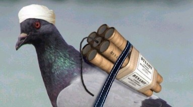 a.aaa-a-new-pigeon-bomb-383x214