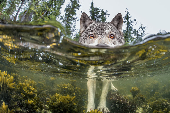 national_geographic_photo_05