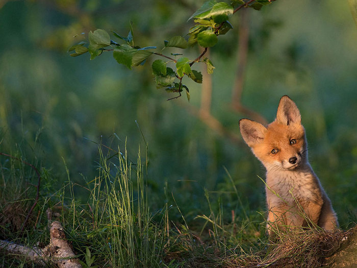 national_geographic_photo_15