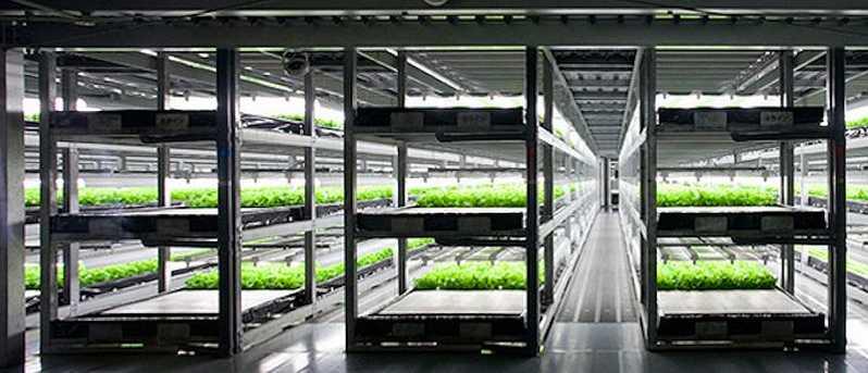 greenhousetechnology.international
